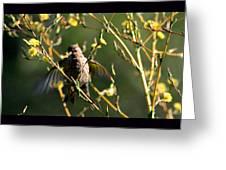 Tiny Bird In Wild Lettuce  Greeting Card