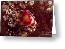Tiny Cowrie Shell On Dendronephtya Soft Greeting Card
