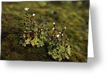 Tiny Flowering Plant Grows In Moss Greeting Card