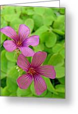 Tiny Flowers In The Clover Greeting Card
