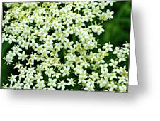 Tiny Flowers Greeting Card
