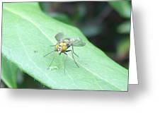 Tiny Fly Greeting Card