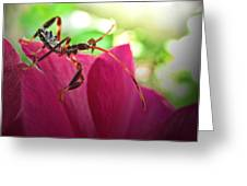 Tiny Leaf Hopper  Greeting Card