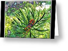 Tiny New Pine Cones Greeting Card