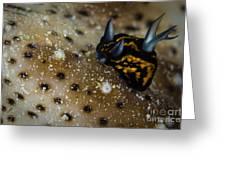 Tiny Nudibranch On Sea Cucumber Greeting Card