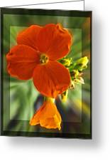 Tiny Orange Flower Greeting Card