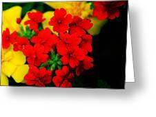 Tiny Verbena Greeting Card