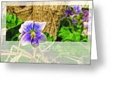 Tiny Violet   Blank Greeting Card Greeting Card