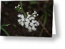 Tiny Wild Flowers Greeting Card