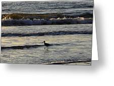 Tip Toeing In The Waves Greeting Card