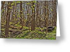 Tire Trees Greeting Card