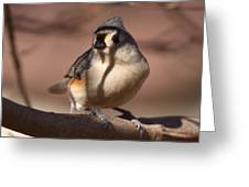 Titmouse - Split By Shadows Greeting Card