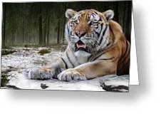 TJ  Greeting Card by Big Cat Rescue
