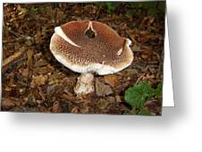 Toadstool Greeting Card