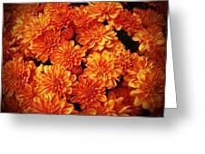 Toasted Orange Chrysanthemums Greeting Card