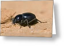 Tok-tokkie Beetle Greeting Card