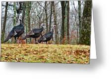 Tom Turkeys All In A Row 1 Greeting Card
