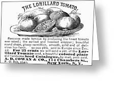 Tomato Advertisement, 1889 Greeting Card