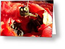 Tomato Creature Greeting Card