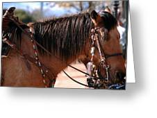 Tombstone Horse Greeting Card