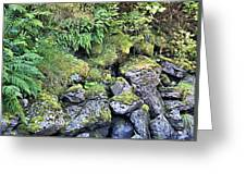 Tongass Fern Greeting Card