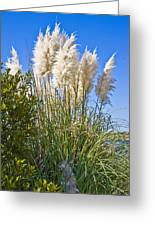 Topsail Grasses Greeting Card by Betsy Knapp