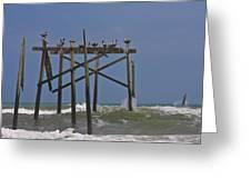 Topsail Ocean City Pelicans Greeting Card