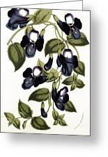Torenia Asiatica Pulcherrima Greeting Card