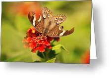 Torn Wings Full Of Life Greeting Card