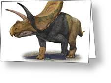 Torosaurus Latus, A Prehistoric Era Greeting Card