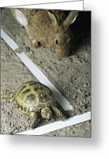 Tortoise And Hare Greeting Card