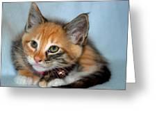 Tortoiseshell Kitten Greeting Card