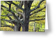 Tortured Trees Greeting Card