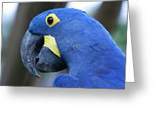 Totally Blue  Greeting Card
