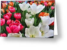 Totally Tulips Greeting Card