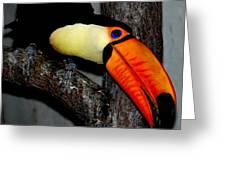 Toucan Sam Greeting Card