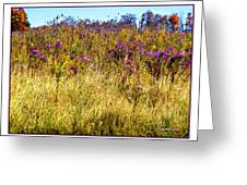 Touch Of Purple In October Greeting Card