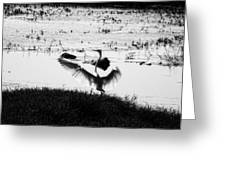 Touchdown-black And White Greeting Card