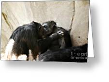 Touching Moment Gorillas Kissing Greeting Card