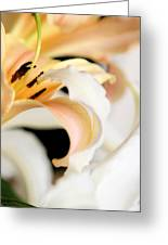Touching Softly Greeting Card