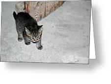 Tough Barn Kitten Greeting Card