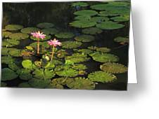 Tower Grove Park Water Lilies Greeting Card