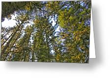 Towering Kodiak Greeting Card