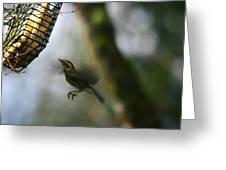 Townsend Warbler In Flight Greeting Card