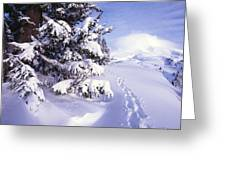 Tracks In The Snow Greeting Card