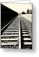 Tracks Of Our Ancestors Greeting Card