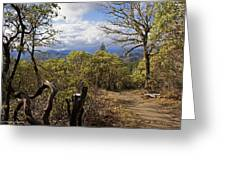Trail At Cathedral Hills Greeting Card
