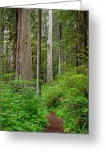 Trail Through Redwoods Greeting Card