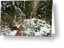 Trail Through Snow-decked Redwood Grove Greeting Card