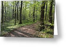 Trail Through Spring Forest Bavaria Greeting Card